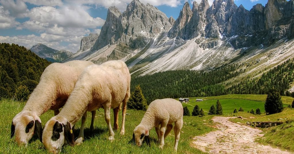 sheep grazing in a valley